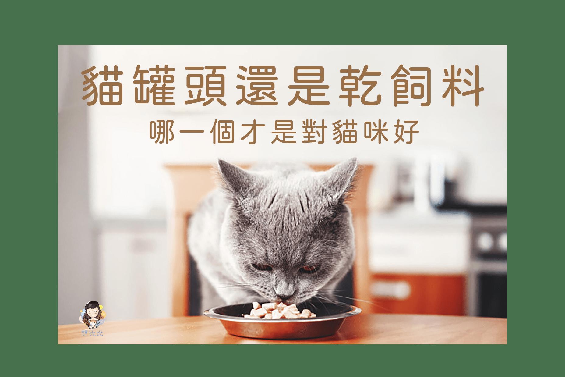 貓罐頭還是乾飼料-首圖