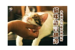 貓咪語言翻譯